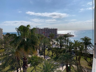 1172: Apartment in Torrevieja